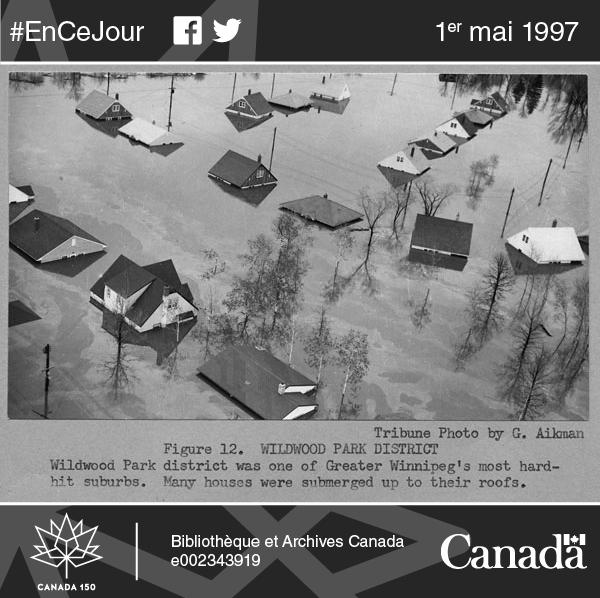 Photographie d'une autre des inondations majeures qui surviennent régulièrement au Manitoba : le district de Wildwood Park, l'une des banlieues du Grand Winnipeg les plus durement touchées en 1950. L'eau est montée jusqu'au toit de nombreuses maisons.